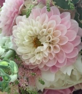 Dahlia by Flowers by Catherine